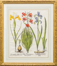 Two Basil Besler Hand Colored Engravings of Lilies and Irises 27-1/2 x 24 x 1.5 inches (69.9 x 61 x 31