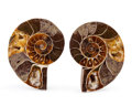 Fossils:Cepholopoda, Sliced Ammonite Pair. Cleoniceras sp.. Cretaceous. Madagascar.2.46 x 2.05 x 0.58 inches (6.25 x 5.20 x 1.48 cm). ... (Total:2 Items)