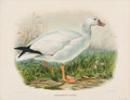 Fine Art - Painting, American:Modern  (1900 1949)  , Daniel Girard Elliot (American, 1830-1907). Anser Albatus andExanthemops Rossii, from The New and Heretofore Unfigured Sp...(Total: 2 Items)