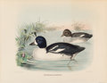Prints, Daniel Girard Elliot (American, 1830-1907). Bucephala Islandica and Chen Caerulescens, from The New and Heretofore Unfigur... (Total: 2 Items)