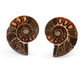 Fossils:Cepholopoda, Sliced Ammonite Pair. Cleoniceras sp.. Cretaceous. Madagascar.2.18 x 1.78 x 0.48 inches (5.54 x 4.51 x 1.21 cm). ... (Total:2 Items)