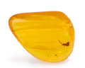 Amber, Amber with Inclusions. Hymenaea protera. Miocene. DominicanRepublic. 1.66 x 1.24 x 0.56 inches (4.22 x 3.16 x 1.42 cm)...