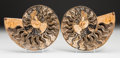 Decorative Arts, Continental, A Sliced Ammonite Pair. Cleoniceras sp.,Cretaceous,Madagascar. 7-1/4 x 6 x 0-3/4 inches (18.4 x 15.2 x 1.9cm)... (Total: 2 Items)