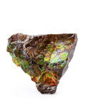 Fossils:Cepholopoda, Ammolite Fossil. Placenticeras sp.. Cretaceous. BearpawFormation. Southern Alberta, Canada. 5.31 x 4.52 x 1.31 inches(13...