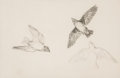 Fine Art - Work on Paper:Drawing, John Chumley (American, 1928-1984). Baby Martin in Flight.Pencil on paper. 14 x 21 inches (35.6 x 53.3 cm) (sight). Sig...