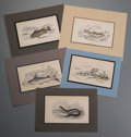 Prints:Contemporary, Group of Approximately Thirty Nineteenth Century IchthyologicalPrints. Circa 1900-1950. Various sizes, the largest measurin...