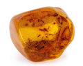 Amber, Baltic Amber with Inclusions. Eocene. Baltic Region. Russia. 1.50 x 1.42 x 1.26 inches (3.80 x 3.60 x 3.20 cm). ...