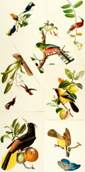 Prints:Contemporary, Group of Approximately 100 Miscellaneous Animal Life Prints. Circa1900. Various sizes, the largest measuring 22 x 15 inches...