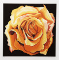 Prints:Contemporary, Lowell Nesbitt (American, 1933-1993). Yellow Rose, 1982.Silkscreen in colors on Arches paper. 25 x 25 inches (image). 3...