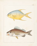 Books:Natural History Books & Prints, John Edwards Holbrook. Ichthyology of South Carolina.Charleston, S. C.: Russell and Jones, 1860. Volume I (all publ...