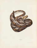 Books:Color-Plate Books, John Edwards Holbrook. North American Herpetology; Or, aDescription of the Reptiles Inhabiting the United States....(Total: 2 )