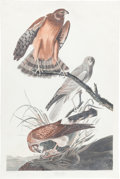Books:Prints & Leaves, John James Audubon. Marsh Hawk, Plate 356, No. 72. London:R. Havell, 1837. Hand-colored engraving on watermarke...
