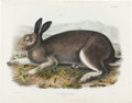 Books:Prints & Leaves, John James Audubon. Polar Hare, Plate 32, No. 27.Philadelphia: J. T. Bowen, 1844. Lithograph, hand-colored by J...