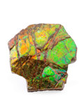 Fossils:Cepholopoda, Ammolite Fossil. Placenticeras sp.. Cretaceous. BearpawFormation. Southern Alberta, Canada. 4.09 x 4.02 x 1.05 inches(10...