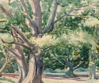 Maximilien Luce (French, 1858-1941) Tree Study Watercolor and pencil on paper 13-3/4 x 15 inches