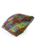 Fossils:Cepholopoda, Ammolite Fossil. Placenticeras sp.. Cretaceous. BearpawFormation. Southern Alberta, Canada. 4.07 x 2.69 x 0.59 inches(10...