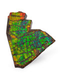 Fossils:Cepholopoda, Ammolite Fossil. Placenticeras sp.. Cretaceous. BearpawFormation. Southern Alberta, Canada. 4.13 x 2.87 x 0.42 inches(10...