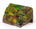 Fossils:Cepholopoda, Ammolite Fossil. Placenticeras sp.. Cretaceous. BearpawFormation. Southern Alberta, Canada. 2.51 x 1.98 x 1.06 inches(6....