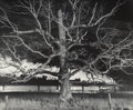 Photographs:Gelatin Silver, O. Winston Link (American, 1914-2001). Giant Oak, Max Meadows,Virginia, 1957. Gelatin silver, 1991. Oversized, 20 x 23-...