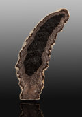 Fossils:Paleobotany (Plants), Petrified Fern. Cyathodendron texanum. Eocene. Texas, USA. 7.25 x 2.25 x 0.75 inches (18.4...