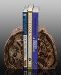 Fossils:Paleobotany (Plants), Petrified Wood Bookends. 5.75 x 5.50 x 4.00 inches (14.61 x 13.97 x 10.16 cm). ... (Total: 2 Items)