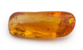 Amber, Amber with Inclusions. Hymenaea protera. Miocene.Dominican Republic. ...