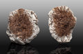 Minerals:Small Cabinet, Astrophyllite Nodule Pair. Eveslogchorr Mountain. Khibiny Massif, Kola Peninsula. Murmanskaja Oblast', Northern Re... (Total: 2 Items)