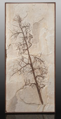 Fossils:Paleobotany (Plants), Fossil Palm Flower. Undetermined species. Eocence Age. Green River Formation. Wyoming, USA. ...