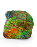 Fossils:Cepholopoda, Ammolite Fossil. Placenticeras sp.. Cretaceous. BearpawFormation. Southern Alberta, Canada. 3.02 x 3.10 x 0.55 inches(7....