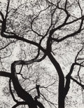 Photographs, George A. Tice (American, b. 1938). Trees, 1964-65. Portfolio of 12 gelatin silver prints, in original black cloth portf...
