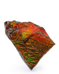 Fossils:Cepholopoda, Ammolite Fossil. Placenticeras sp.. Cretaceous. BearpawFormation. Southern Alberta, Canada. 3.65 x 2.31 x 0.56 inches(9....