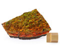 Fossils:Cepholopoda, Ammolite Fossil. Placenticeras sp.. Cretaceous. BearpawFormation. Southern Alberta, Canada. 4.41 x 2.60 x 0.28 inches(11...