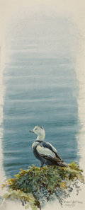 Fine Art - Work on Paper:Watercolor, Robert McLellan Bateman (Canadian, b. 1930). Labrador Duck,1990. Watercolor and gouache on paper. 9-3/4 x 4 inches (24....