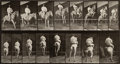 Photographs, Eadweard Muybridge (British, 1830-1904). Horses Galloping andJumping (from Animal Locomotion, Plate 645), 1887.Col...