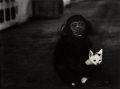 Photographs, W. Eugene Smith (American, 1918-1978). Egret in Flight and Monkey & Kitten, Africa (two works), 1954. Gelatin si... (Total: 2 Items)