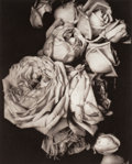 Photographs:Photogravure, Edward Jean Steichen (American, 1879-1973). Heavy Roses,Voulangis, France, 1914. Photogravure on Rives BFK, 1981. 8 x1...