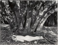 Photographs:Gelatin Silver, Wynn Bullock (American, 1902-1975). Girl in the Forest, 1954. Gelatin silver, printed later. 7-1/2 x 9-5/8 inches (19.1 ...