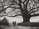 Gordon Converse (American, 1921-1999) Nepalese walk under huge tree in mountains, Pokhara, Nepal, 1964 Gelatin silver
