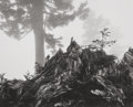 Photographs, Ansel Adams (American, 1902-1984). Tree, Stump and Mist, Northern Cascades, Washington, from Portfolio VII, 1958. Ge...
