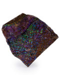 Fossils:Cepholopoda, Ammolite Fossil. Placenticeras sp.. Cretaceous. BearpawFormation. Southern Alberta, Canada. 3.78 x 3.60 x 0.43 inches(9....
