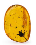 Amber, Amber with Inclusions. Hymenaea protera. Oligocene.Dominican Republic. 0.92 x 0.63 x 0.31 inches (2.34 x1.59...
