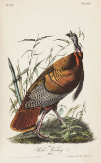 John James Audubon. The Birds of America, From Drawings Made in the United States and Their