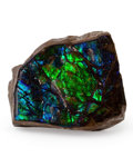 Fossils:Cepholopoda, Ammolite Fossil. Placenticeras sp.. Cretaceous. Bearpaw Formation. Southern Alberta, Canada. 2.00 x 1.66 x 0.43 inches (5....
