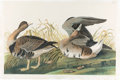 Books:Natural History Books & Prints, John James Audubon. White-Fronted Goose - Plate 380. New York:[John Woodhouse Audubon], 1860. Bien edition, chromolithograp...