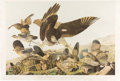 Books:Natural History Books & Prints, John James Audubon. Virginian Partridge - Plate 289. New York: [John Woodhouse Audubon], 1859. Bien edition, chromolithograp...