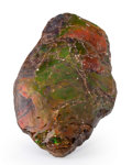 Fossils:Cepholopoda, Ammolite Fossil. Placenticeras sp.. Cretaceous.Bearpaw Formation. Southern Alberta, Canada. 5.61x 3.27 x...