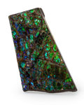 Fossils:Cepholopoda, Ammolite Fossil. Placenticeras sp.. Cretaceous. Bearpaw Formation. Southern Alberta, Canada. 2.30 x 1.26 x 0.24 inches (5....