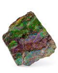 Fossils:Cepholopoda, Ammolite Fossil. Placenticeras sp.. Cretaceous. BearpawFormation. Southern Alberta, Canada. 3.10 x 3.57 x 0.55 inches(7....