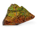 Fossils:Cepholopoda, Ammolite Fossil. Placenticeras sp.. Cretaceous. BearpawFormation. Southern Alberta, Canada. 6.04 x 4.02 x 0.49 inches(15...
