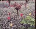 Photographs, Stephen Shore (American, b. 1947). Garden at Giverny, France, 1982. Dye coupler. 8 x 10 inches (20.3 x 25.4 cm). Signed,...